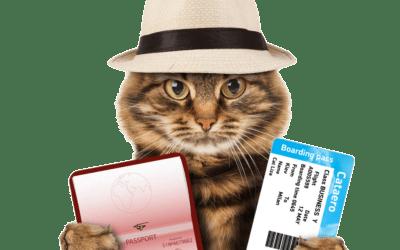 Partir en voyage avec son animal ?